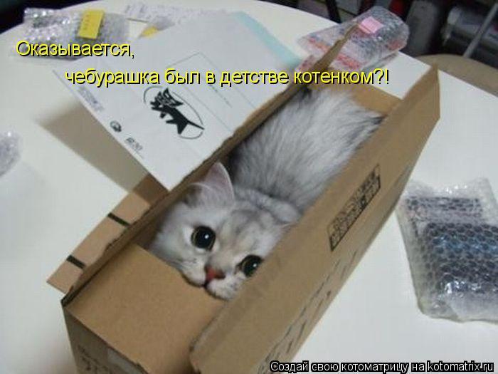 Котоматрица: Оказывается, чебурашка был в детстве котенком?!