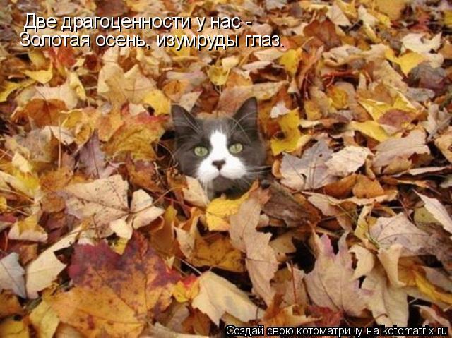 Котоматрица: Две драгоценности у нас -  Золотая осень, изумруды глаз.