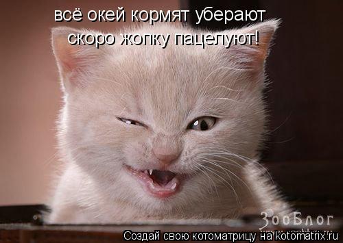 Котоматрица: всё окей кормят уберают  скоро жопку пацелуют!