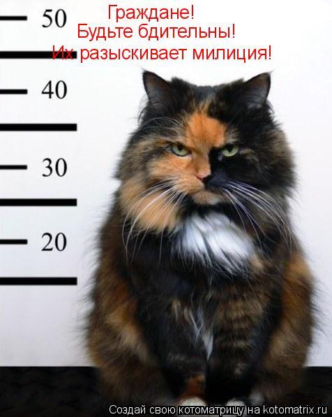 Котоматрица: Их разыскивает милиция! Граждане! Будьте бдительны!