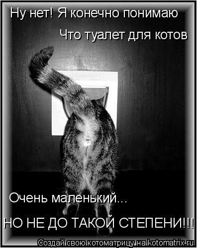Котоматрица: Ну нет! Я конечно понимаю Что туалет для котов Очень маленький... НО НЕ ДО ТАКОЙ СТЕПЕНИ!!!