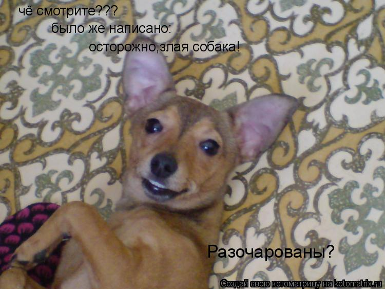 Котоматрица: чё смотрите??? было же написано : осторожно,злая собака! Разочарованы?