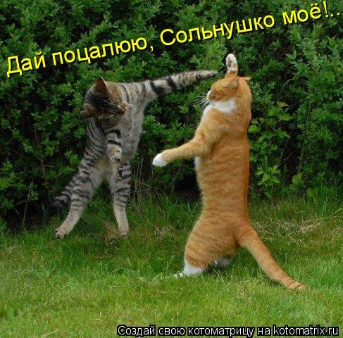 Котоматрица: Дай поцалюю, Сольнушко моё!..