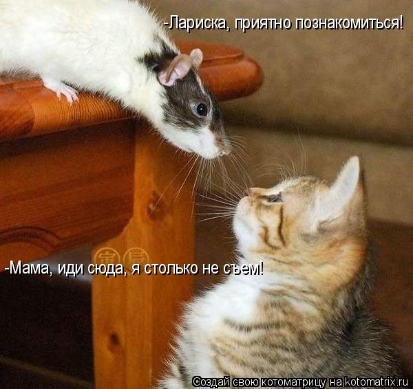 Котоматрица: -Лариска, приятно познакомиться! -Мама, иди сюда, я столько не съем!