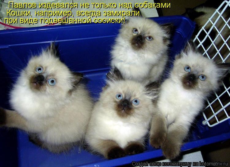 Котоматрица: Павлов издевался не только над собаками Кошки, например, всегда замирали  при виде подвешанной сосиски!