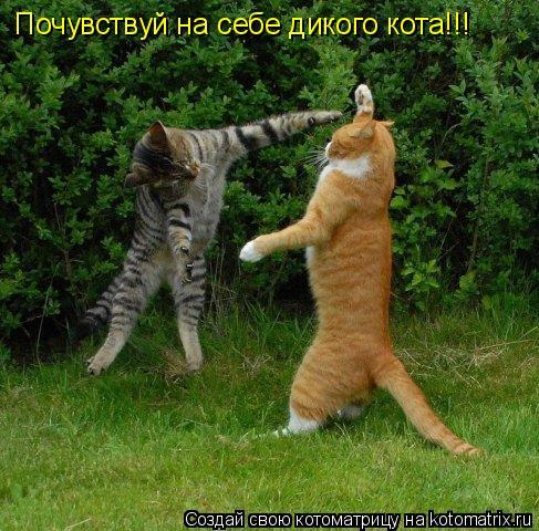 Котоматрица: Почувствуй на себе дикого кота!!!