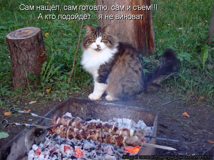 Котоматрица: Сам нащёл, сам готовлю, сам и съем!!! А кто подойдёт... я не виноват