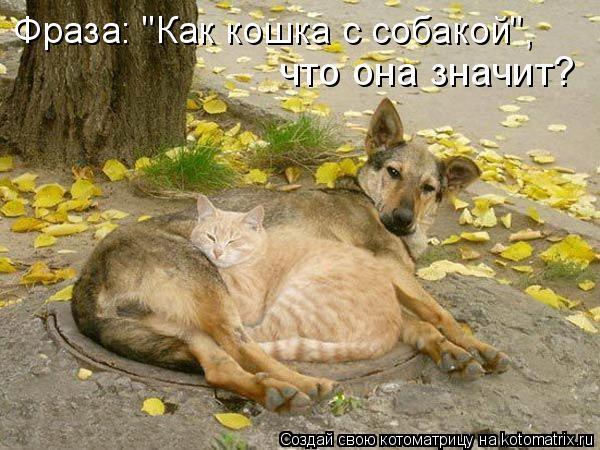 """Котоматрица: Фраза: """"Как кошка с собакой"""", что она значит?"""