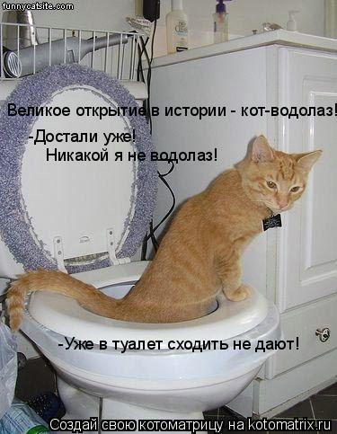 Котоматрица: Великое открытие в истории - кот-водолаз! -Достали уже!  Никакой я не водолаз! -Уже в туалет сходить не дают!