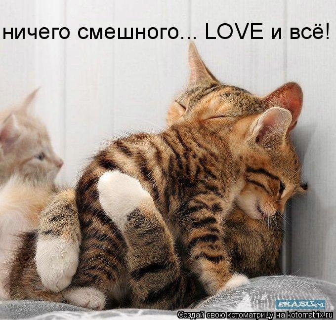 Котоматрица: ничего смешного... LOVE и всё!