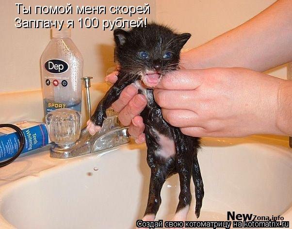 Котоматрица: Ты помой меня скорей Заплачу я 100 рублей!