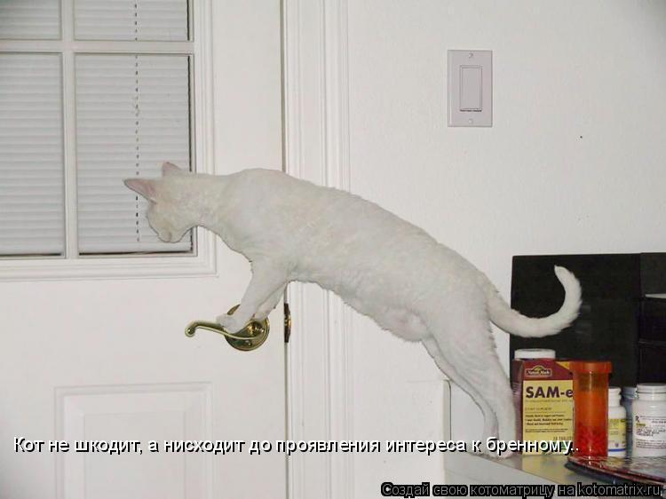 Котоматрица: Кот не шкодит, а нисходит до проявления интереса к бренному..