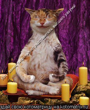Котоматрица: Кот - венец творенья и представитель высшего разума!