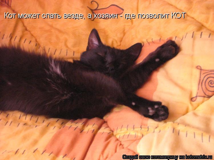 Котоматрица: Кот может спать везде, а хозяин - где позволит КОТ