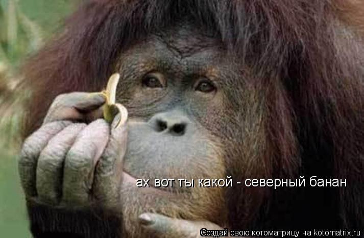 Котоматрица: ах вот ты какой - северный банан