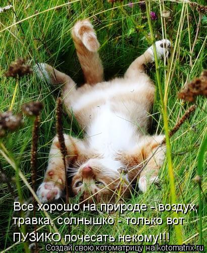 Котоматрица: Все хорошо на природе - воздух, травка, солнышко - только вот ПУЗИКО почесать некому!!!