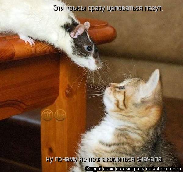 Котоматрица: Эти крысы сразу целоваться лезут, ну почему не познакомиться сначала.