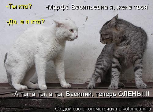 Котоматрица: -Ты кто? -Да, а я кто? -Марфа Васильевна я, жена твоя -А ты, а ты, а ты, Василий, теперь ОЛЕНЬ!!!!