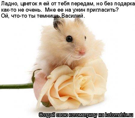 Котоматрица: Ладно, цветок я ей от тебя передам, но без подарка Ой, что-то ты темнишь,Василий. как-то не очень.  Мне ее на ужин пригласить?