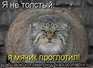 Котоматрица: Я не толстый,  я мячик проглотил!