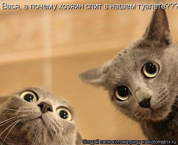 Котоматрица: Вася, а почему хозяин спит в нашем туалете???