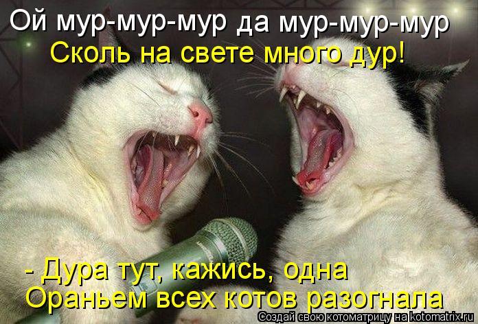 Котоматрица: Ой мур-мур-мур да мур-мур-мур Сколь на свете много дур! - Дура тут, кажись, одна Ораньем всех котов разогнала
