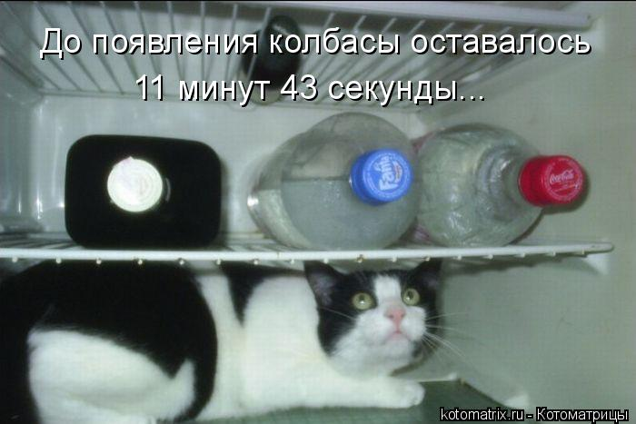 Котоматрица: До появления колбасы оставалось  11 минут 43 секунды...