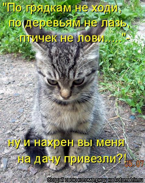 """Котоматрица: """"По грядкам не ходи, по деревьям не лазь, птичек не лови.....""""- ну и нахрен вы меня на дачу привезли?!"""
