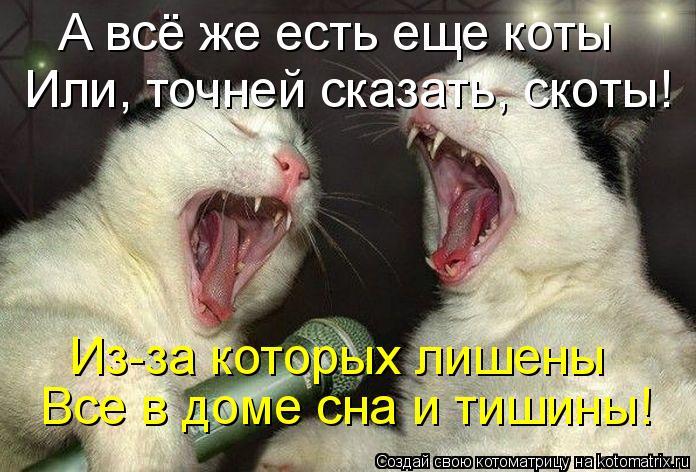 Котоматрица: А всё же есть еще коты Или, точней сказать, скоты! Из-за которых лишены Все в доме сна и тишины!