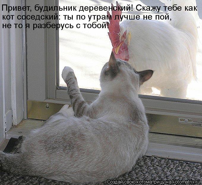 Котоматрица: Привет, будильник деревенский! Скажу тебе как кот соседский: ты по утрам лучше не пой,  не то я разберусь с тобой!