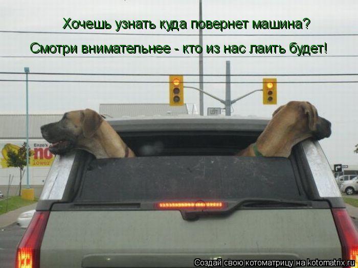 Котоматрица: Хочешь узнать куда повернет машина? Смотри внимательнее - кто из нас лаить будет!