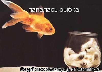 Котоматрица: папалась рыбка