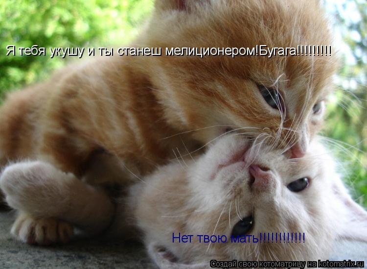 Котоматрица: Я тебя укушу и ты станеш мелиционером!Бугага!!!!!!!!! Нет твою мать!!!!!!!!!!!!