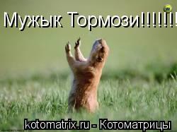 Котоматрица: Мужык Тормози!!!!!!!!