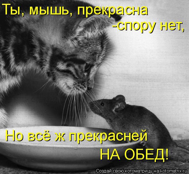 Котоматрица: Ты, мышь, прекрасна -спору нет, Но всё ж прекрасней  НА ОБЕД!