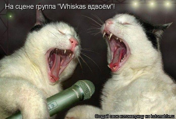 "Котоматрица: На сцене группа ""Whiskas вдвоём""!"