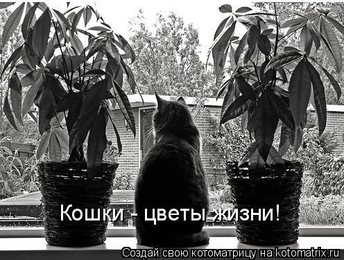 Котоматрица: Кошки - цветы жизни!