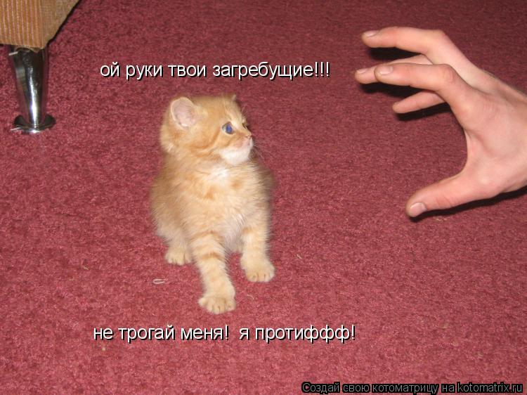 Котоматрица: ой руки твои загребущие!!! не трогай меня!  я протиффф!