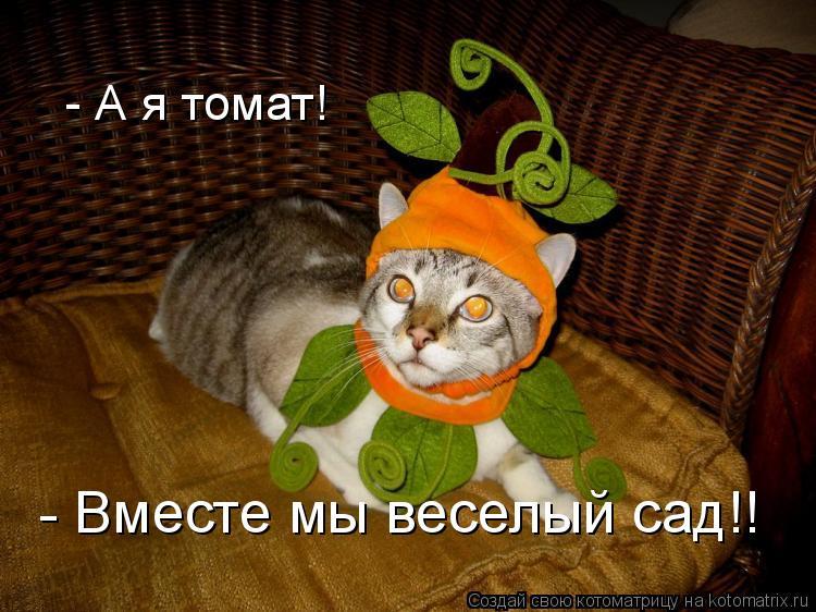 Котоматрица: - А я томат! - Вместе мы веселый сад!!