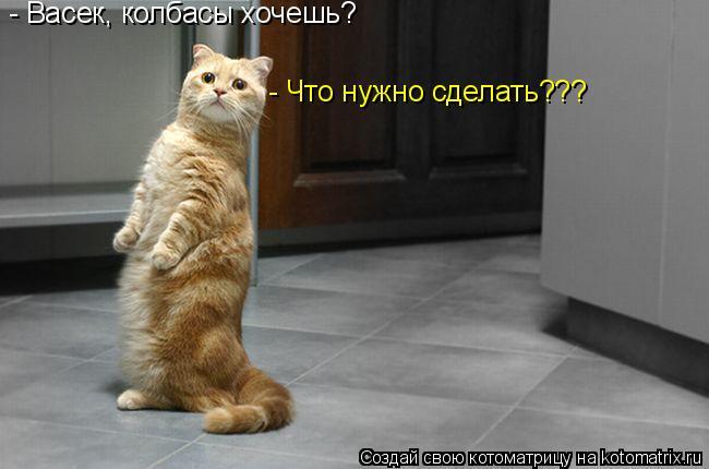 Котоматрица: - Васек, колбасы хочешь? - Что нужно сделать???