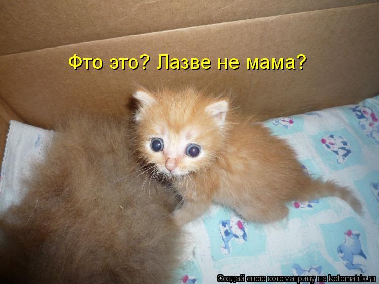 Котоматрица: Фто это? Лазве не мама?
