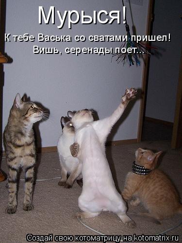 Котоматрица: Мурыся!  К тебе Васька со сватами пришел! Вишь, серенады поет...