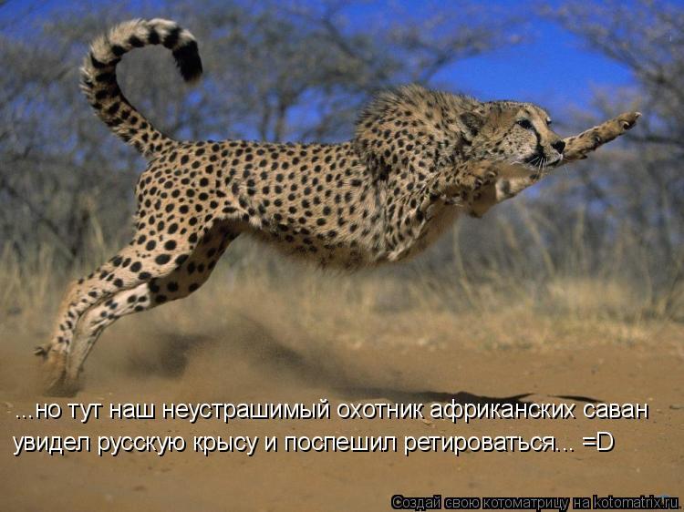 Котоматрица: ...но тут наш неустрашимый охотник африканских саван увидел русскую крысу и поспешил ретироваться... =D