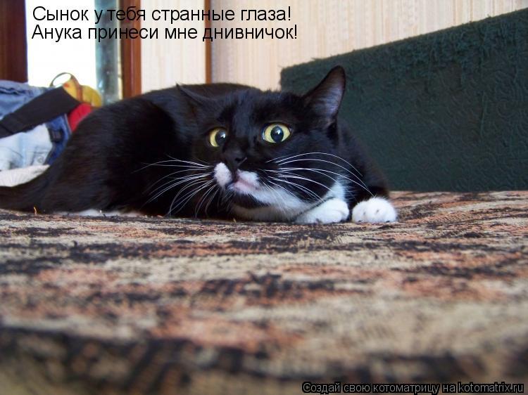Котоматрица: Сынок у тебя странные глаза!  Анука принеси мне днивничок!