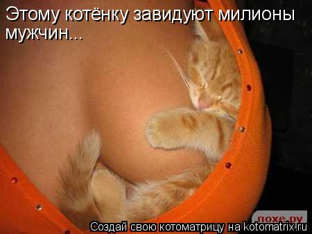 Котоматрица: Этому котёнку завидуют милионы мужчин...