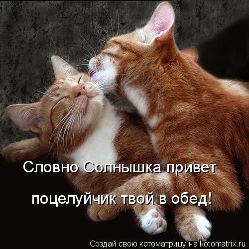 Котоматрица: Словно Солнышка привет поцелуйчик твой в обед!