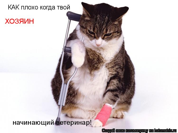 Котоматрица: КАК плохо когда твой ХОЗЯИН начинающий ветеринар!