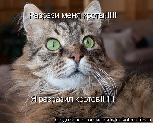 Котоматрица: Разрази меня кроты!!!!! Я разразил кротов!!!!!!