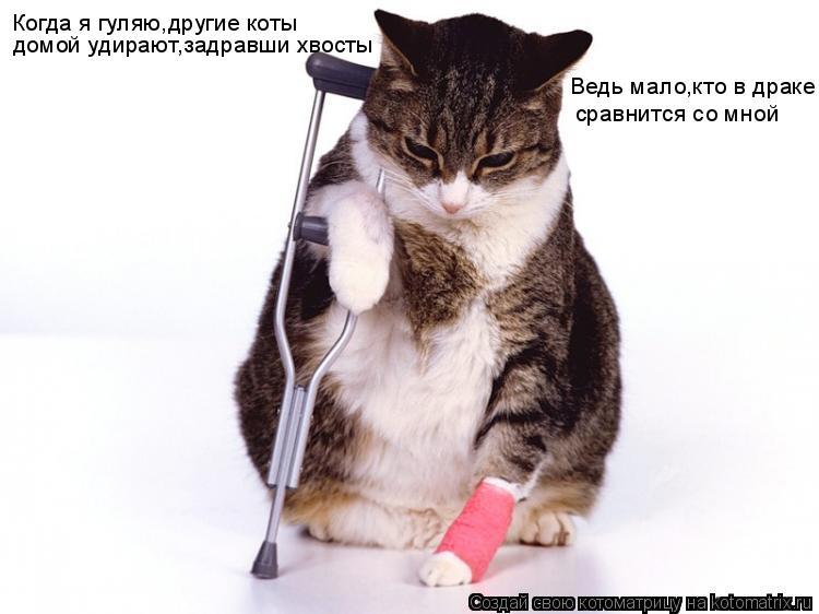 Котоматрица: Когда я гуляю,другие коты Ведь мало,кто в драке сравнится со мной домой удирают,задравши хвосты