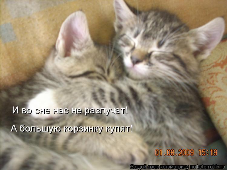 Котоматрица: И во сне нас не разлучат! А большую корзинку купят!